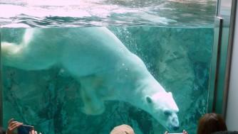 【北海道旅行】旭川の旭山動物園を写真動画で紹介!もぐもぐタイムは見逃すな
