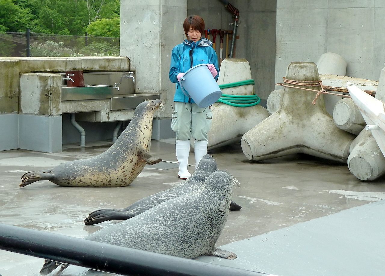 北海道の旭山動物園の観光旅行 アザラシ