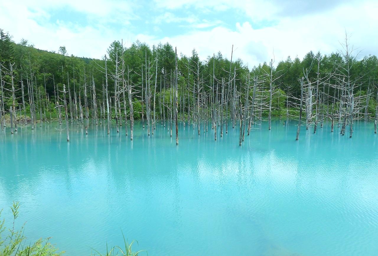 【北海道旅行】美瑛の青い池とおすすめ観光ルート紹介!車なしの行き方も
