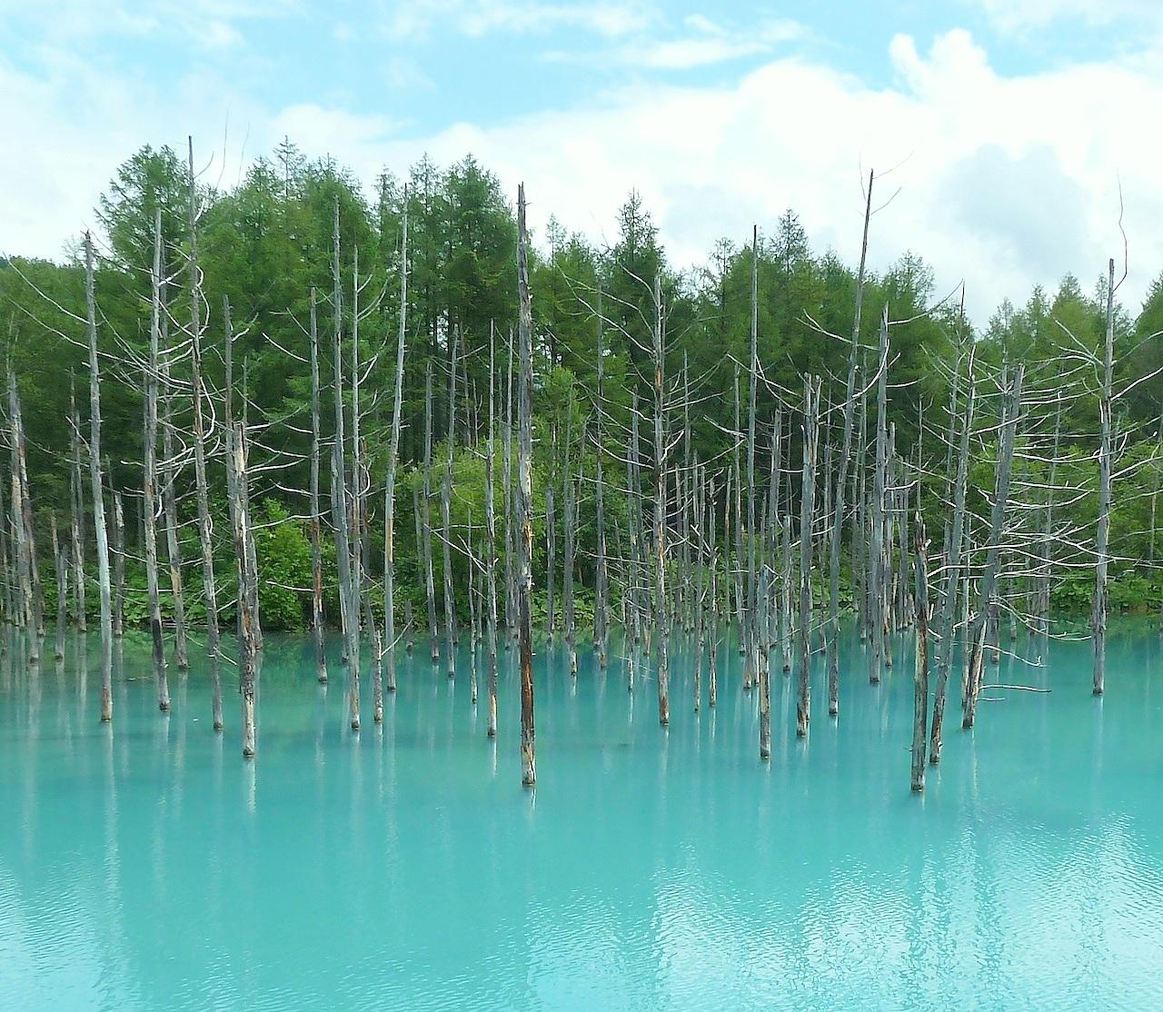 北海道の美瑛の観光旅行 青い池