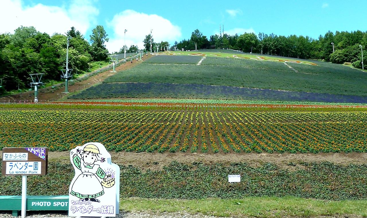 北海道の富良野の観光旅行 北星山町営ラベンダー園