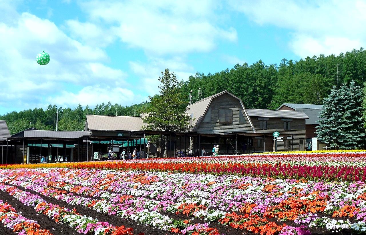 北海道の富良野の観光旅行 ファーム富田のラベンダー園