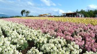 【北海道旅行】初夏の道南/道央の観光やグルメを満喫!車なし1週間プランを紹介