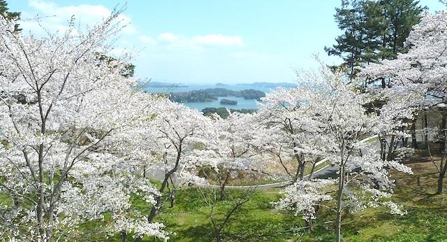 【東北旅行】日本三景の松島と満開の桜!伊達政宗ゆかりの瑞巌寺・円通院も観光