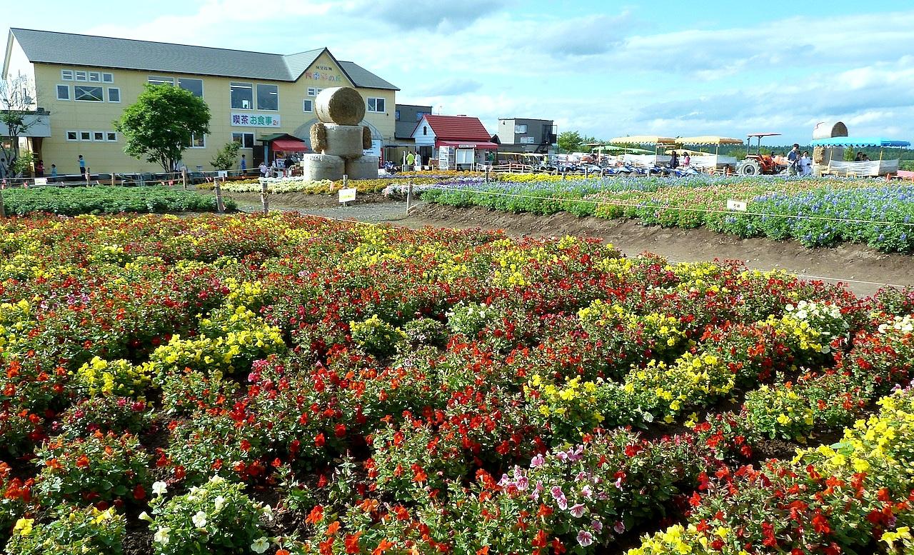 北海道の美瑛の観光旅行 美馬牛の四季彩の丘の花畑