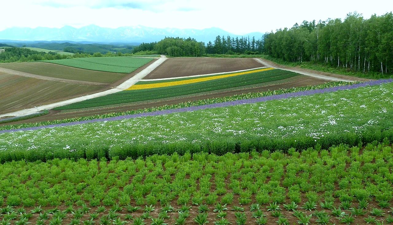 北海道の美瑛の観光旅行 美馬牛の四季彩の丘からの眺め