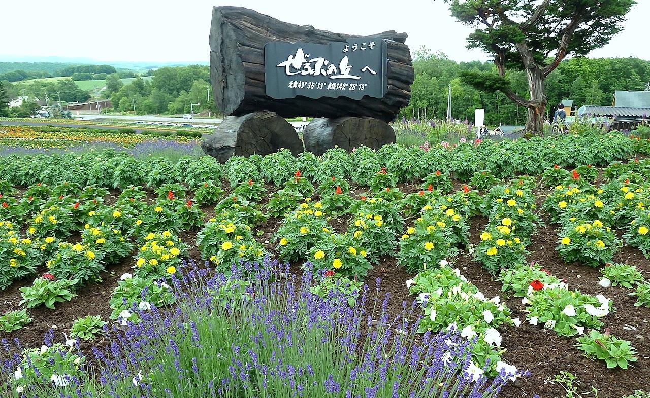 北海道の美瑛の観光旅行 パッチワークの路のぜるぶの丘・亜人夢の丘