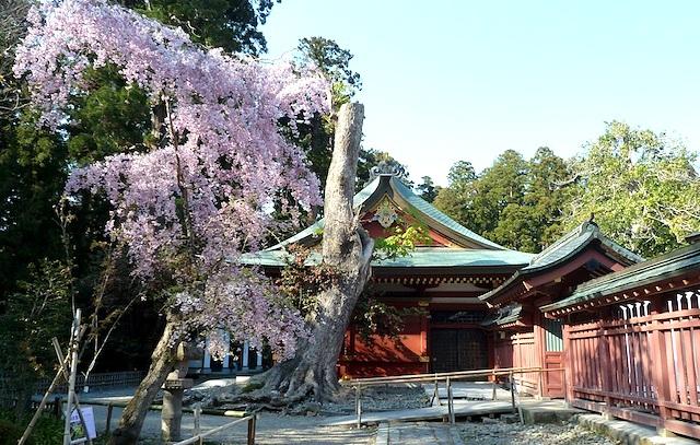 【東北旅行】塩釜神社は桜のおすすめ観光名所!松島の遊覧船にも乗れる