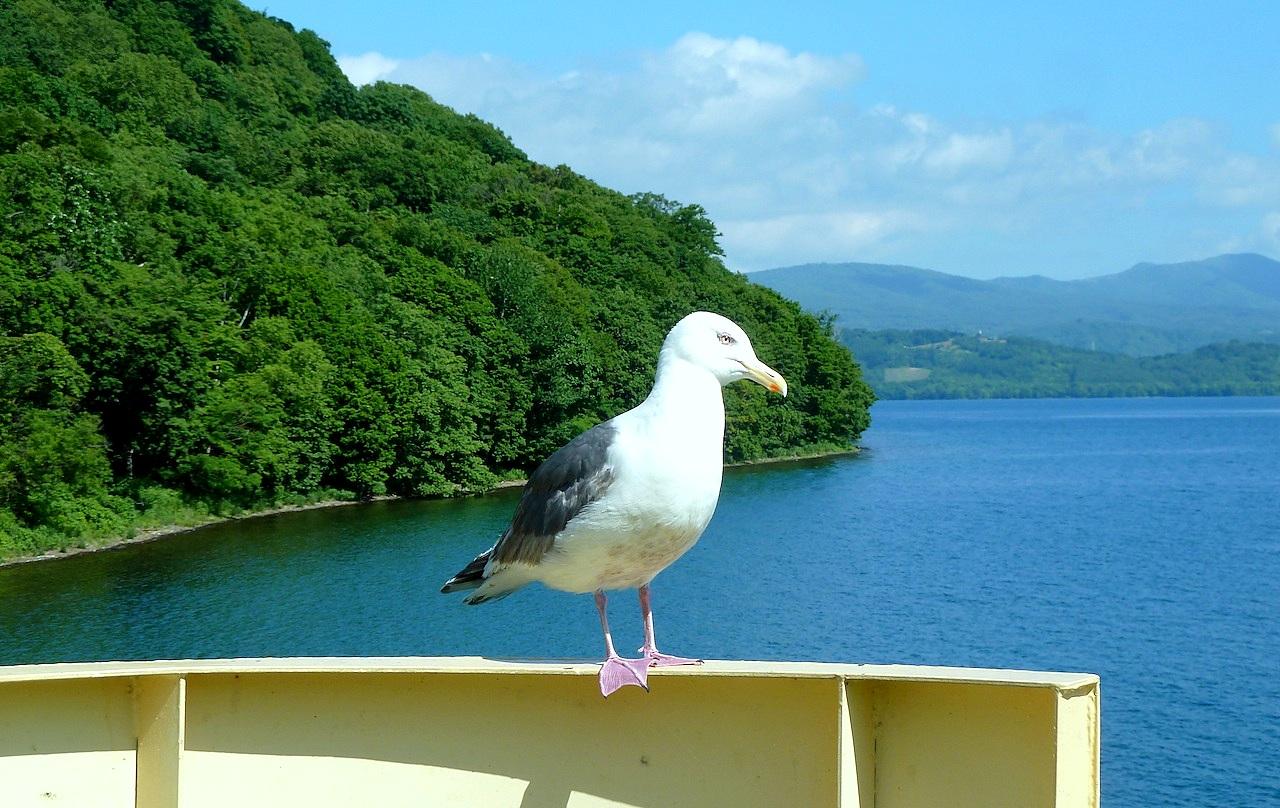 北海道の洞爺湖の観光旅行 クルーズでかもめ